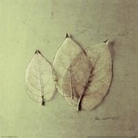 Trio of Skelton Leaves Framed Print