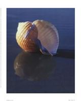 Tun Shell Fine-Art Print