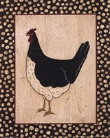 White Bellied Chicken Fine-Art Print