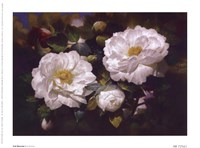Full Blossom I Fine-Art Print