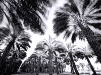 Spinning Palms Fine-Art Print