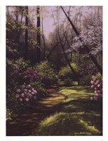 Spring Woods Fine-Art Print