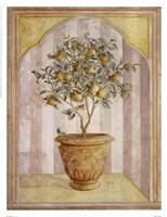 Pear Niche Fine-Art Print