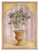 Fig Niche Fine-Art Print
