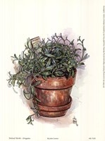 Potted Herbs-Oregano Fine-Art Print