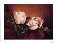 Magnolia Vignette ll Fine-Art Print