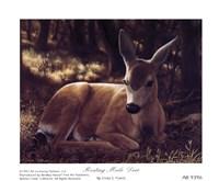 Resting Mule Deer Fine-Art Print