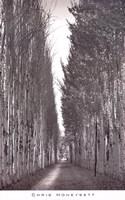 Poplars 2, Kashgar Fine-Art Print