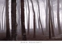 Trees In Fog, S. F. Presidio Fine-Art Print