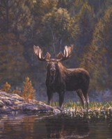 North Country Moose detail Fine-Art Print