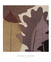 4 Leaves 1 Fine-Art Print