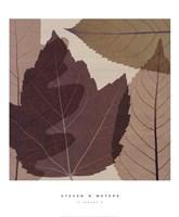 4 Leaves 2 Fine-Art Print