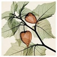 Japanese Lantern Fine-Art Print