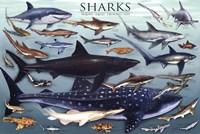 Sharks Fine-Art Print