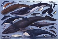 Whales And Dolphins Fine-Art Print