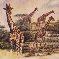 Safari III Fine-Art Print