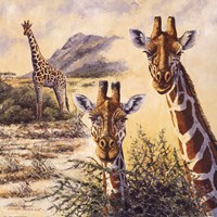 Safari IV Fine-Art Print