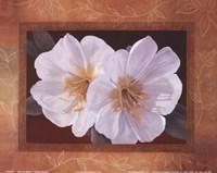 Morning Bloom Fine-Art Print