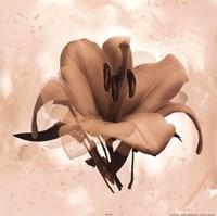X-Ray White Lily Fine-Art Print