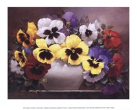 Rainbow of Pansies Framed Print