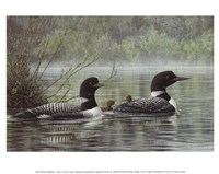Northern Reflections - Loons Fine-Art Print