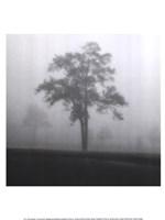 Fog Tree Study I Fine-Art Print