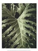 Tropica I Fine-Art Print