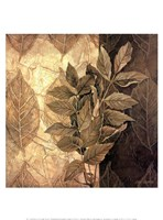 Leaf Patterns IV Fine-Art Print