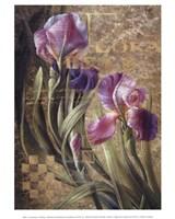 Iris Romance Fine-Art Print