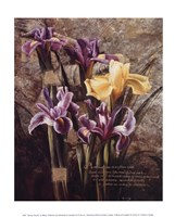 Spring's Bounty Fine-Art Print