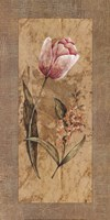 Antique Tulip Fine-Art Print