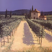 Vineyard Shadows Fine-Art Print