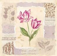 Renaissance Tulip Fine-Art Print