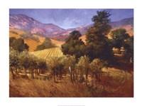 Southern Vineyard Hills Fine-Art Print