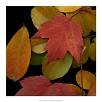 Vivid Leaves III Giclee