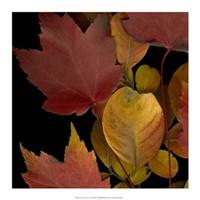 Vivid Leaves IV Giclee