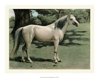 Cassell's Horse I Giclee