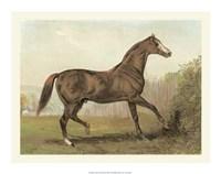 Cassell's Horse III Giclee
