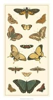 Butterfly Panel I Giclee