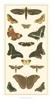 Butterfly Panel II Giclee