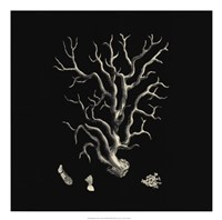 Black And Tan Coral I Giclee