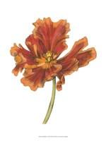 Tulip Beauty I Fine-Art Print