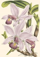 Mini Delicate Orchid I Fine-Art Print
