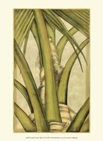 Small Graphic Palms IV Fine-Art Print
