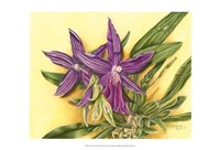 Vibrant Orchid IV Fine-Art Print