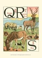 Noah's Alphabet V Fine-Art Print
