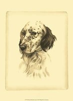 Printed Danchin Setter Fine-Art Print