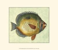 Small Butterfly Fish I Fine-Art Print