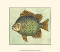 Small Butterfly Fish II Fine-Art Print