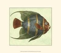 Small Angel Fish I Fine-Art Print